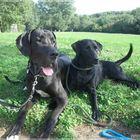 Hunde-Freundschaft