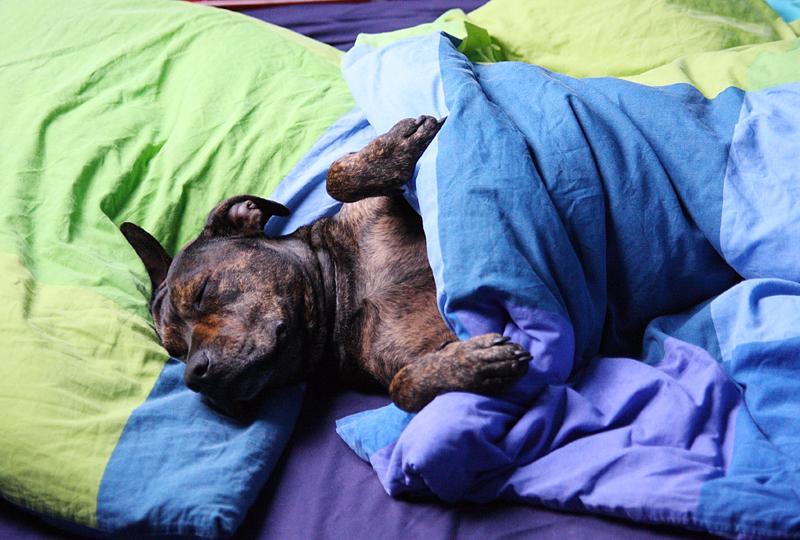 Hunde gehörennicht ins Bett..