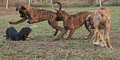 hunde gewusel
