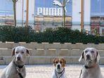 Hunde im Outlett