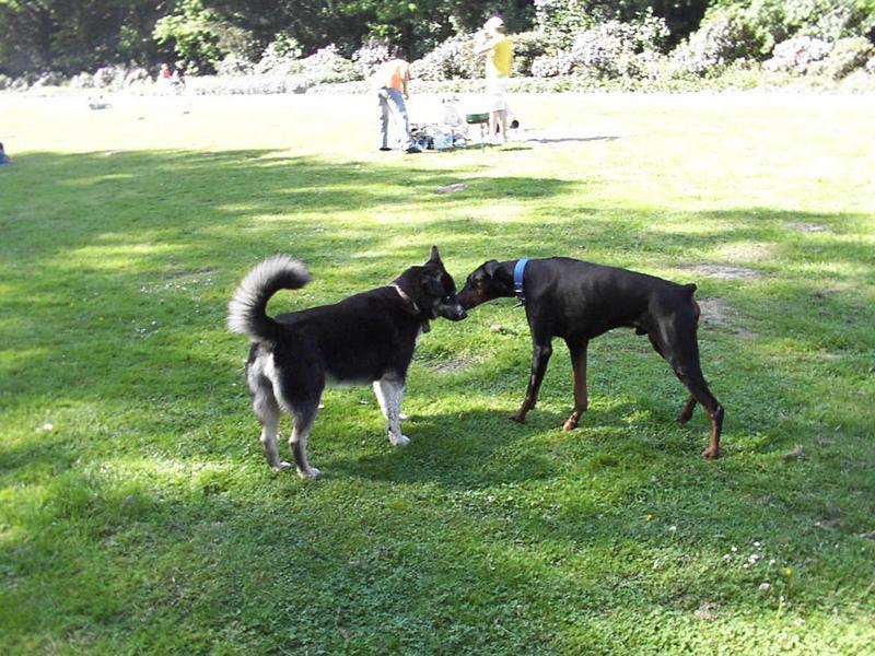 Hunde im Park
