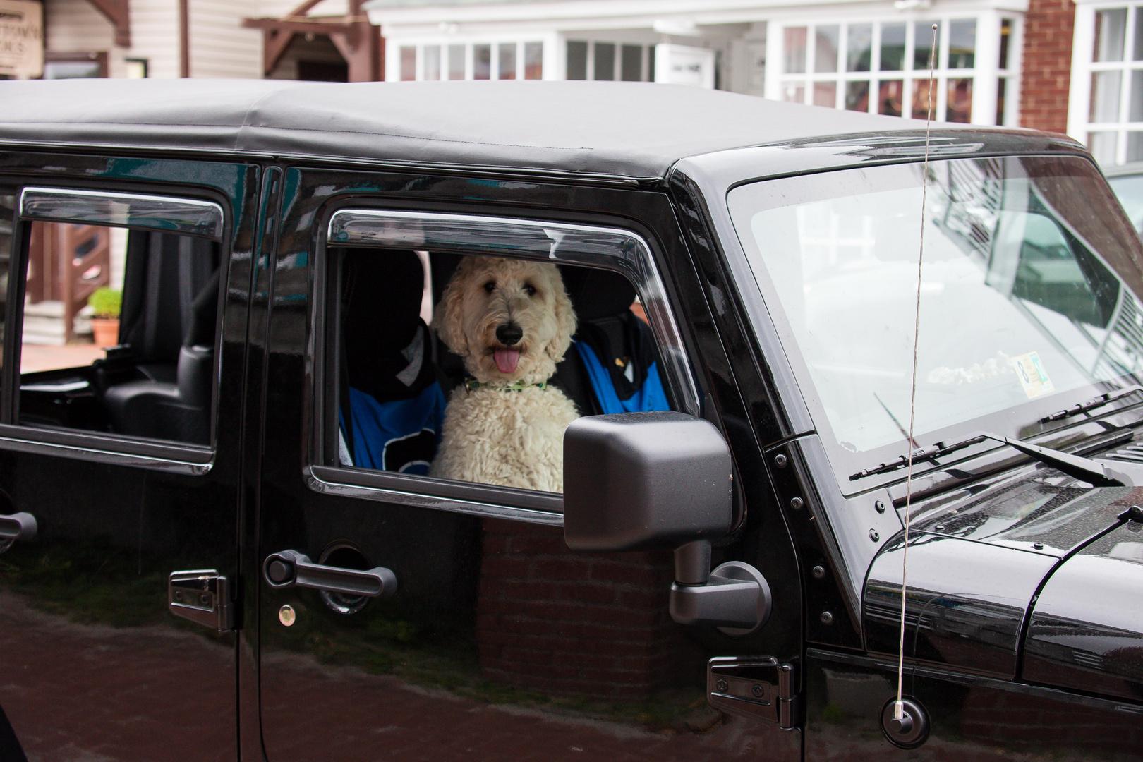 Hunde-Jeep
