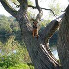Hunde klettern nicht auf Bäume