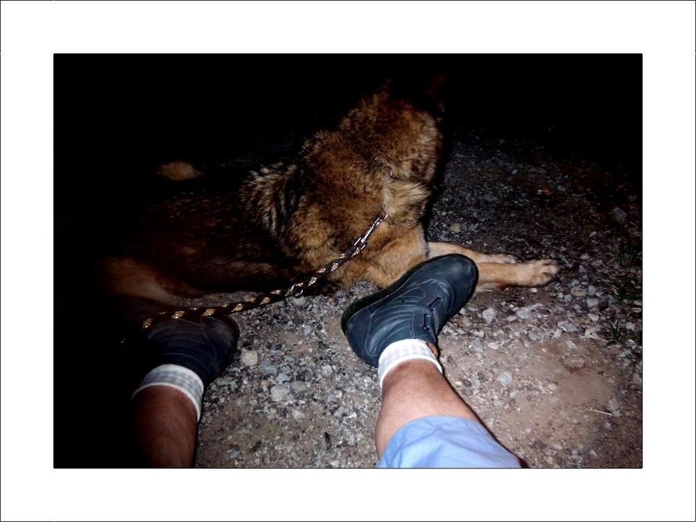 Hunde - Müde