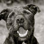 Hunde Portrait (sw)