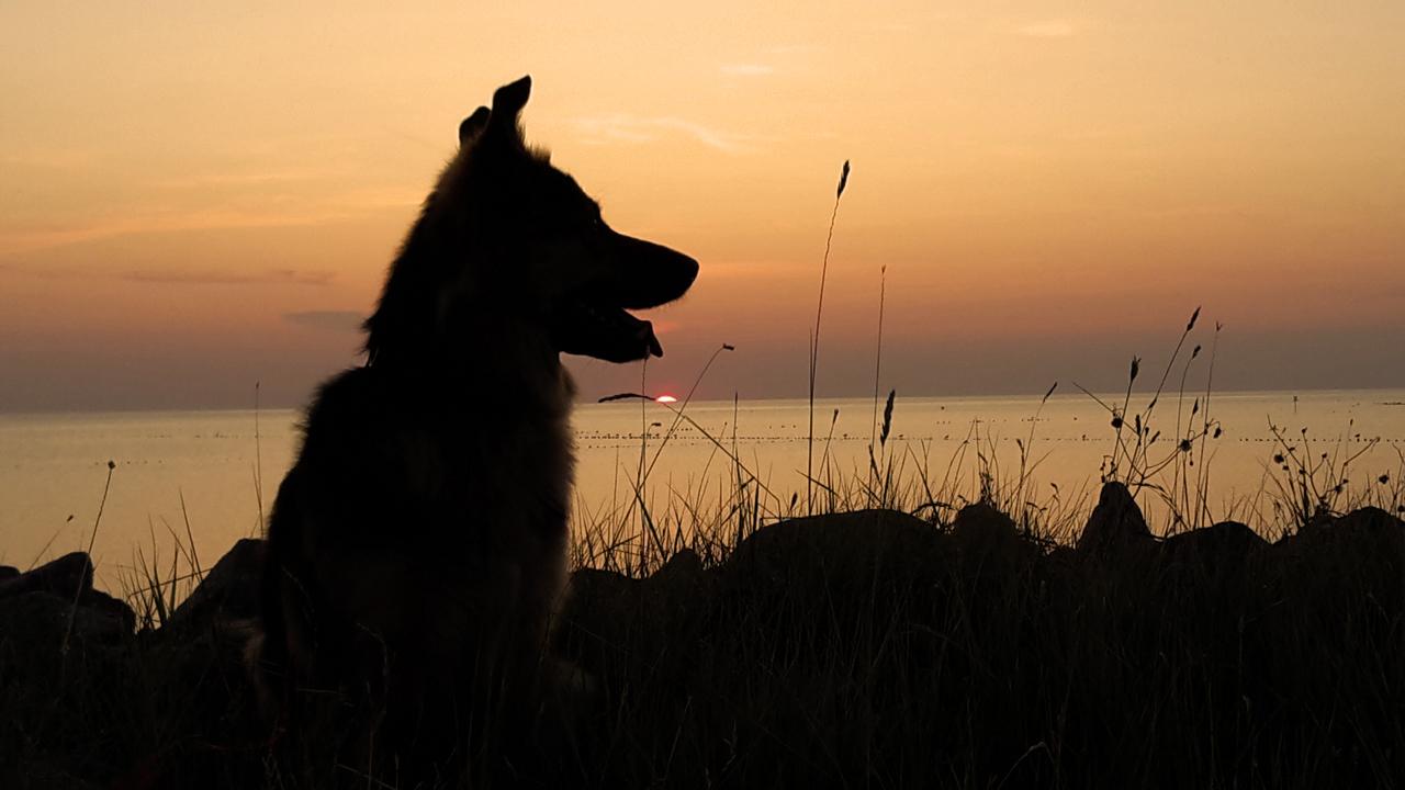 Hundeabend am Strand