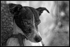 Hundeblick