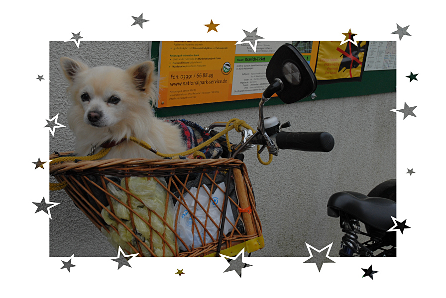 Hundefahrrad