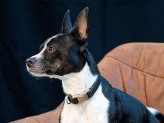 Hundefotografie-Workshop...
