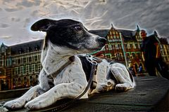 Hundefotospielerei