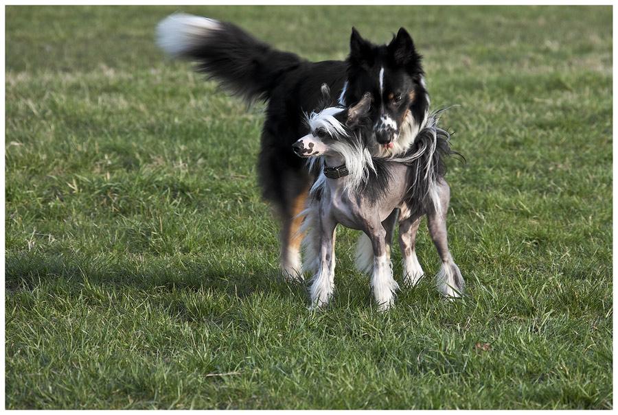 Hundegeflüster, oder....