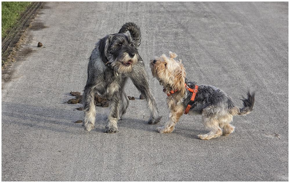 Hundegespräch: