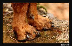 Hundeglück... meine Lieblingspfoten
