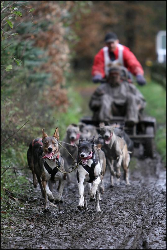 Hundekutschfahrt