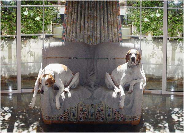 Hundeleben