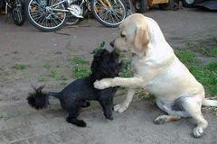 Hundeliebe - Begrüßung mit Kuß