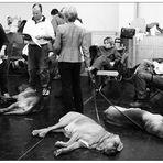 von Hunden&Menschen