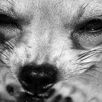 hundemüde