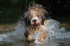 Hundeplantscherei