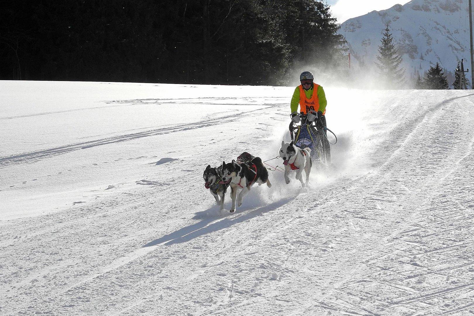 Hundeschlitten mit speed