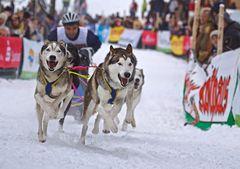 Hundeschlitten Rennen Todtmoos 2012 - 01
