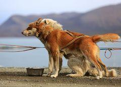 Hundeschlittentour I