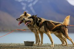 Hundeschlittentour II