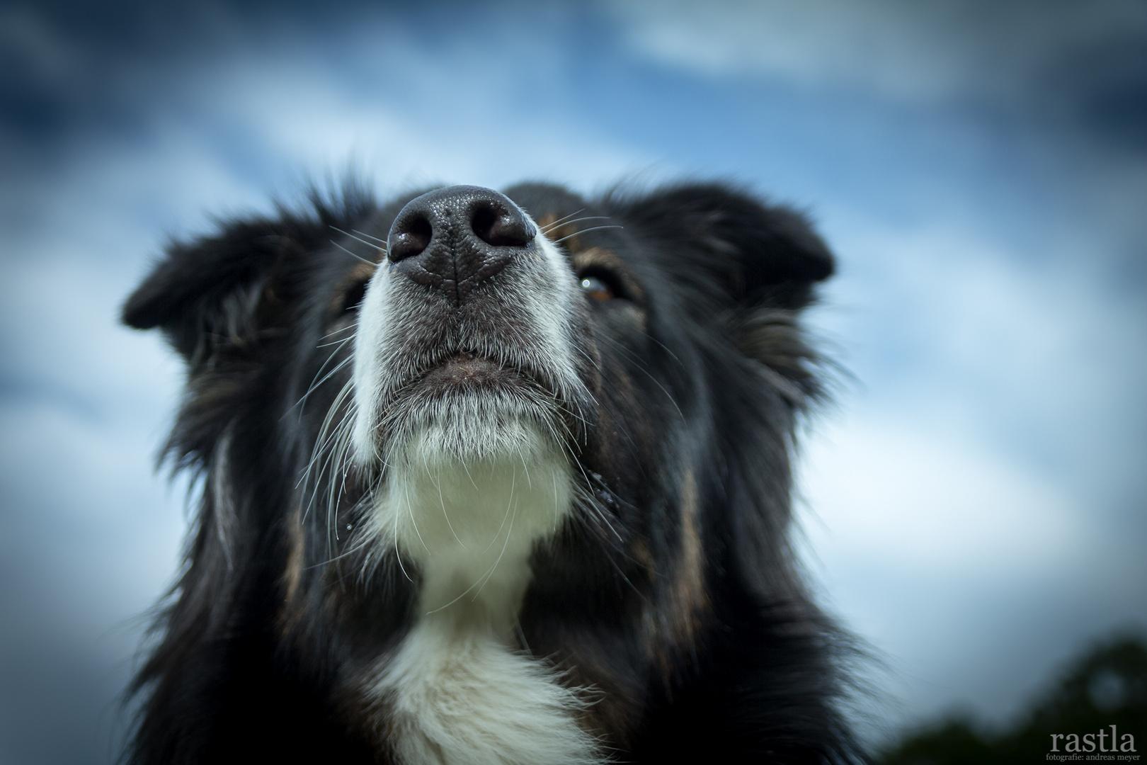 Hundeschnuuute