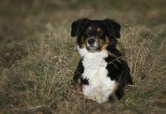 Hundeschule 2