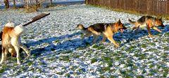 Hundeschule im Schnee***Na ja die Spur davon***Für manche das erste mal***