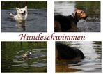 *Hundeschwimmen*