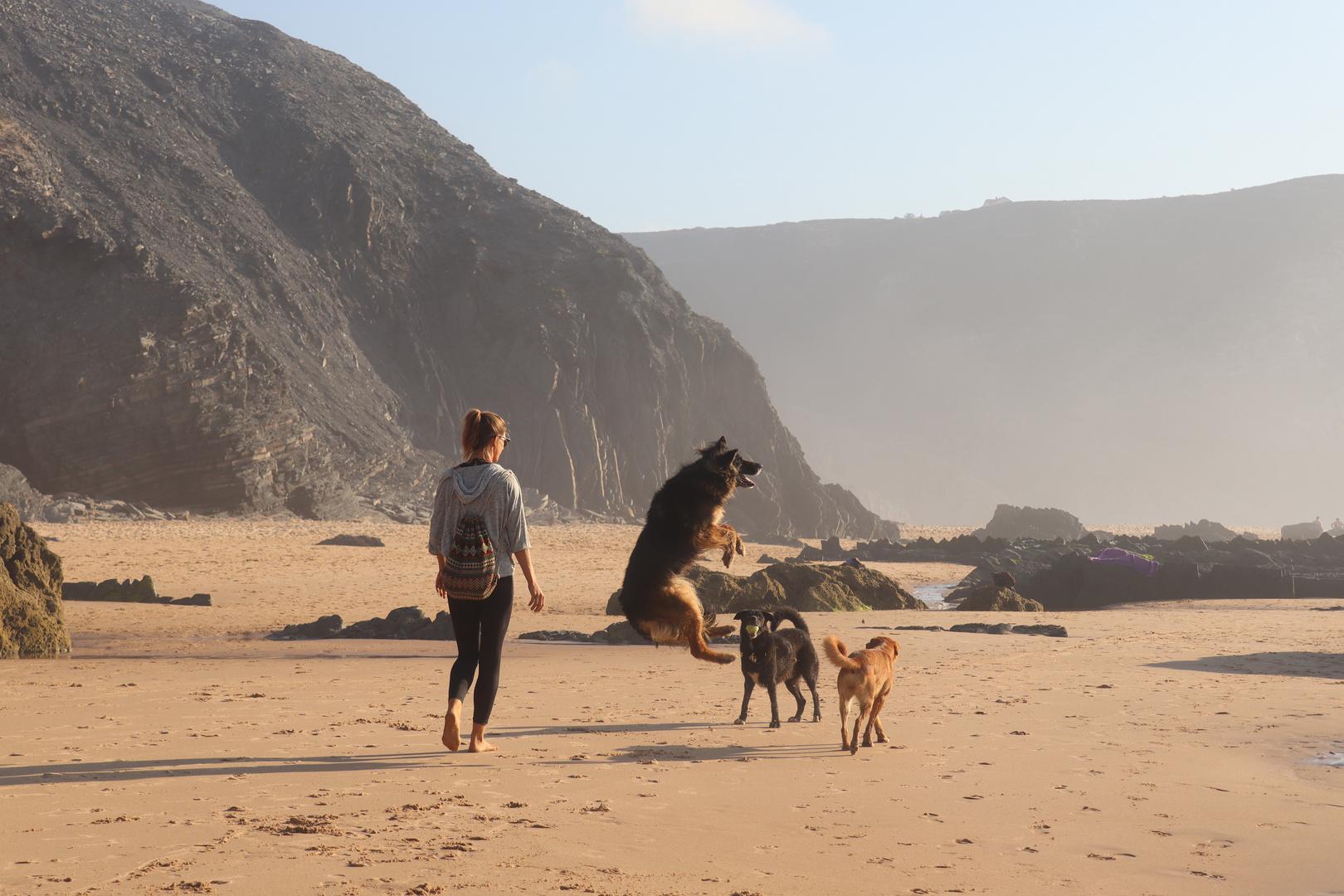 Hundespaß am Strand