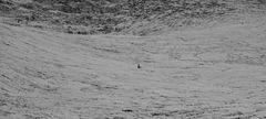 Hundespaziergang in der Eiswüste....