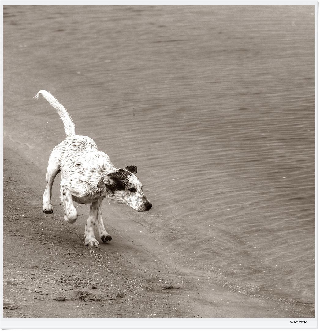 Hundespiele De Kostenlos