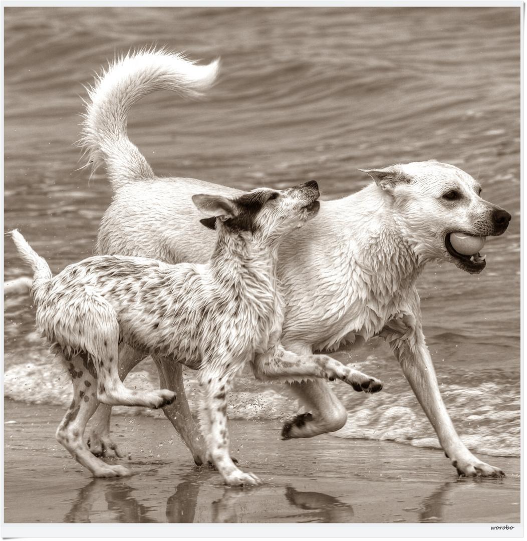 Hundespiele