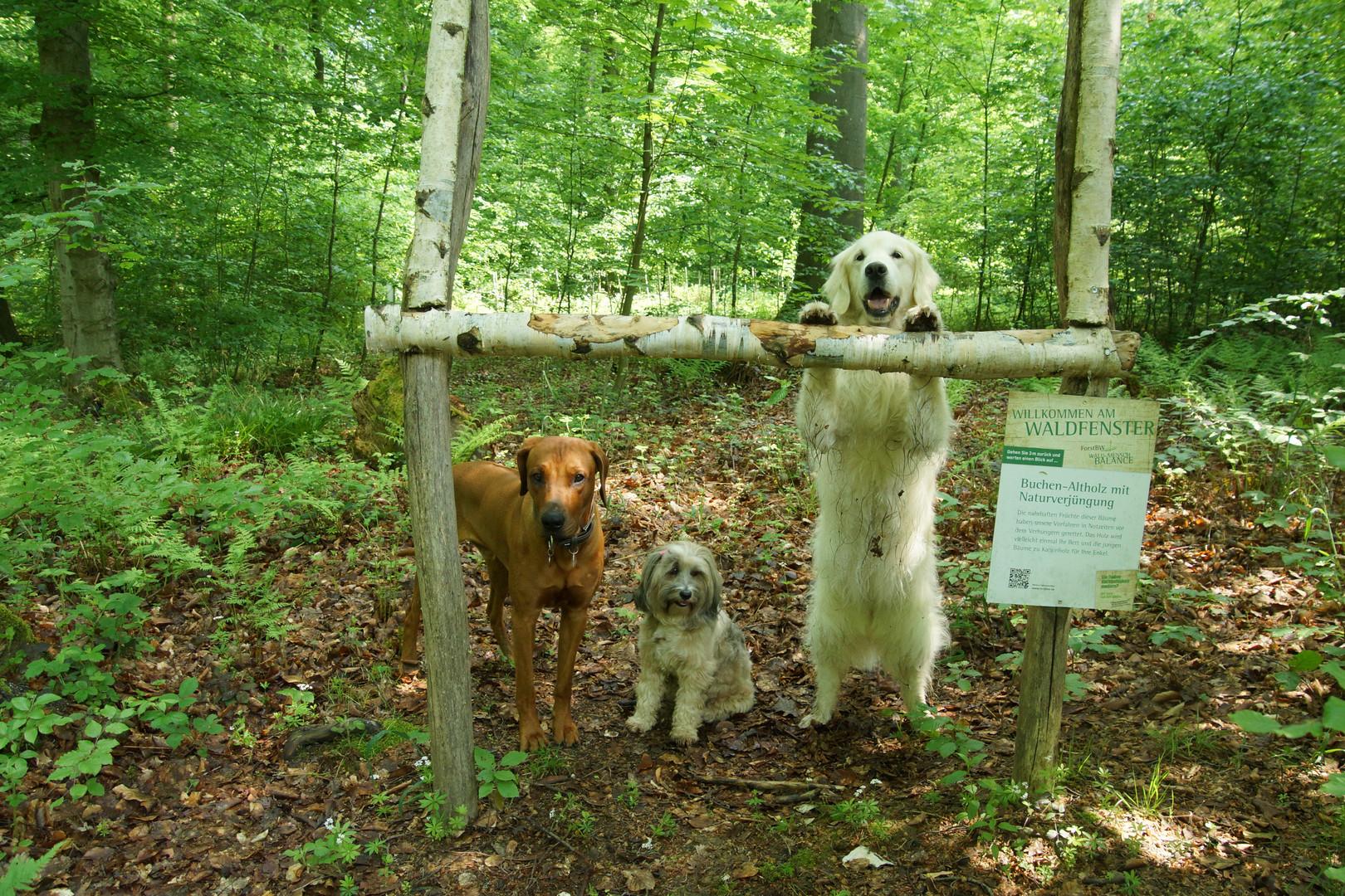 Hundesport...mal anders