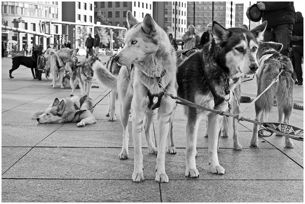 Hundestärken