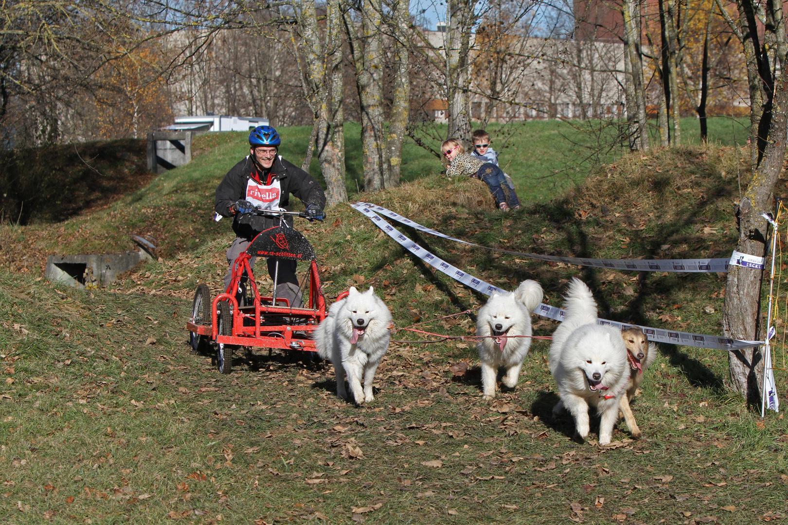 Hundewagenrennen II