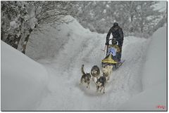 Hundewetter EM-Inzell09