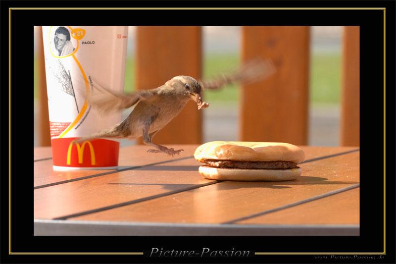 """""""Hunger!"""""""