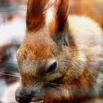 Hungriges Eichhörnchen !!