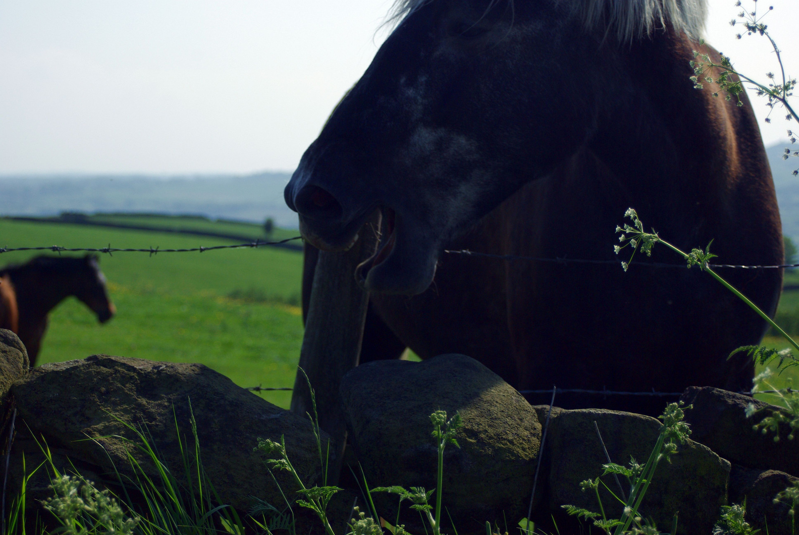 ...hungry horse...