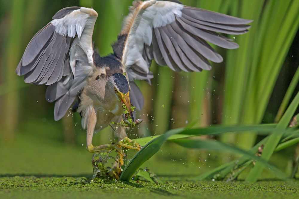 hunting reeds 3