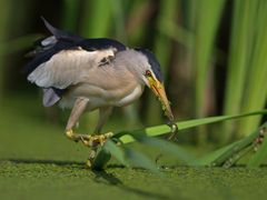 hunting reeds 5