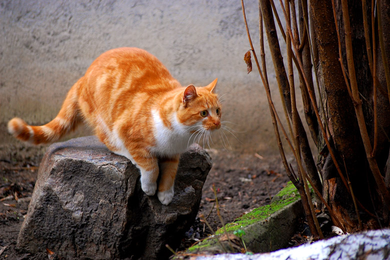 hunting sparrows