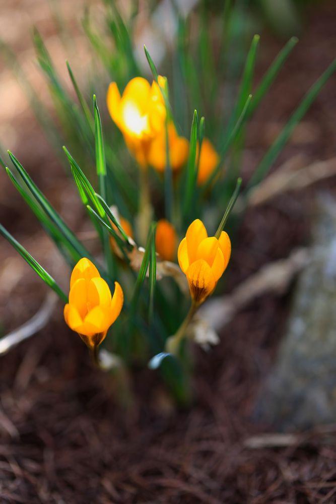 Hura der Frühling ist da
