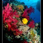 Hurghada reef