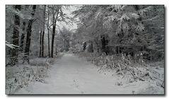Hurra, der erster Schnee ist da !!!