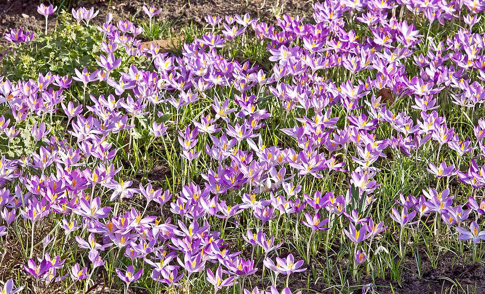 Hurra, der Frühling ist da!!
