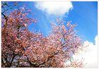 Hurra der Frühling kommt......